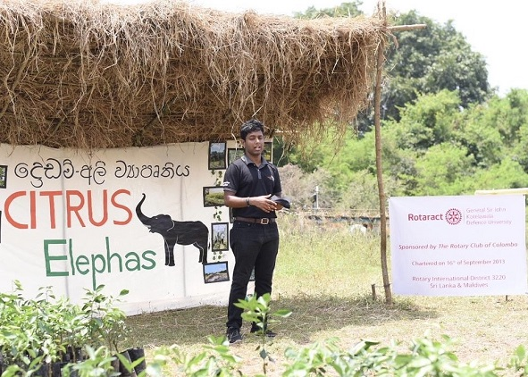 "Introducing a sustainable solution for the Human Elephant Conflict; project ""Citrus Elephas"" conducted by the Rotaract Club"